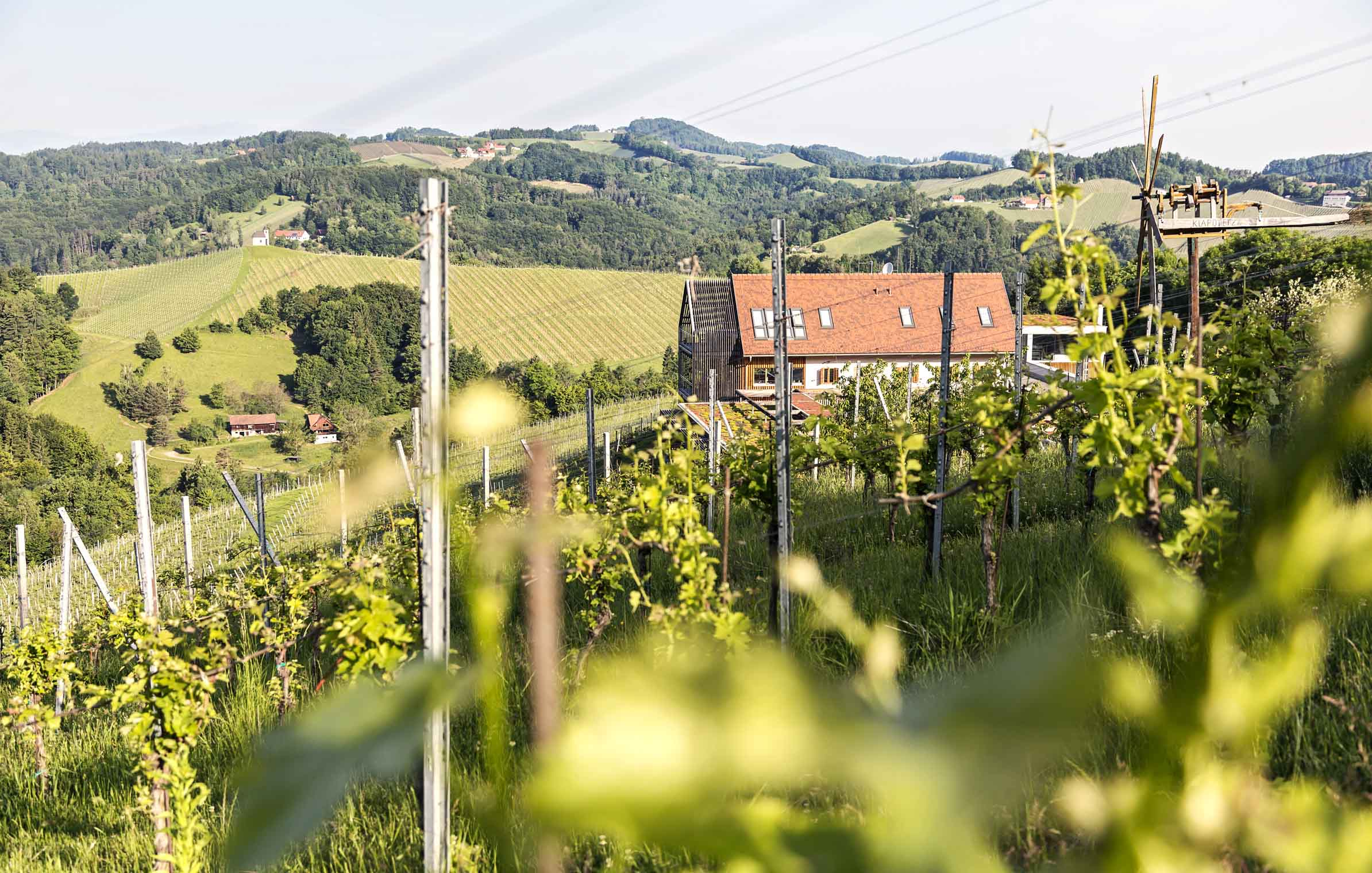 goedwinemakers_wineyard_vines_house_styria_weinstrasse
