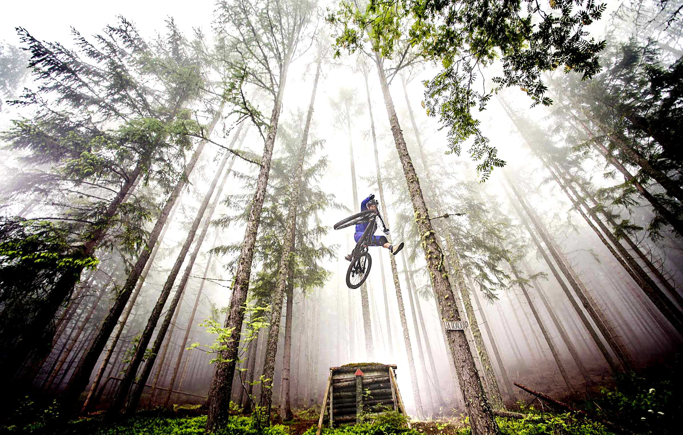 gruber_mani_trees_one_footer_jump_morning_foggy