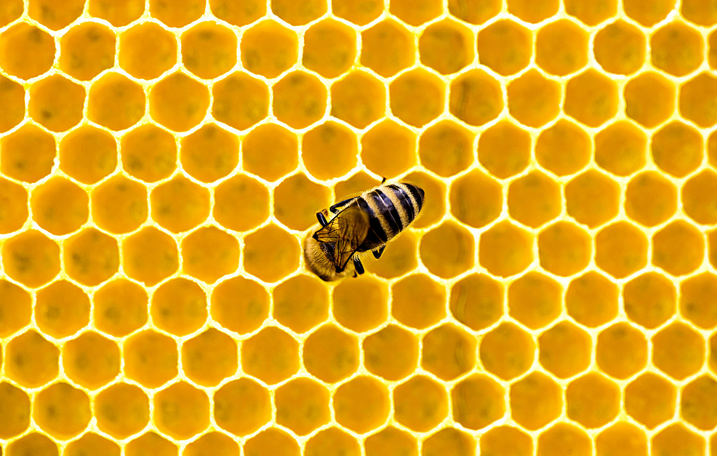 honey_bee_combs_apiary_honeykeeping