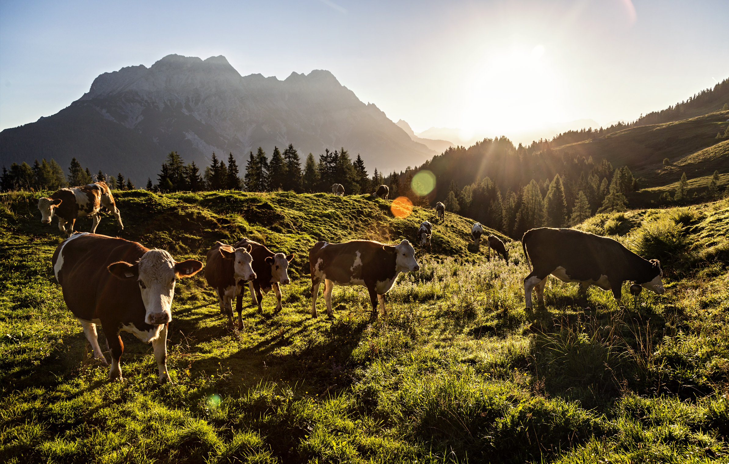 saalfelden3_leogang_sunrise_cows_epic_bike_adventure