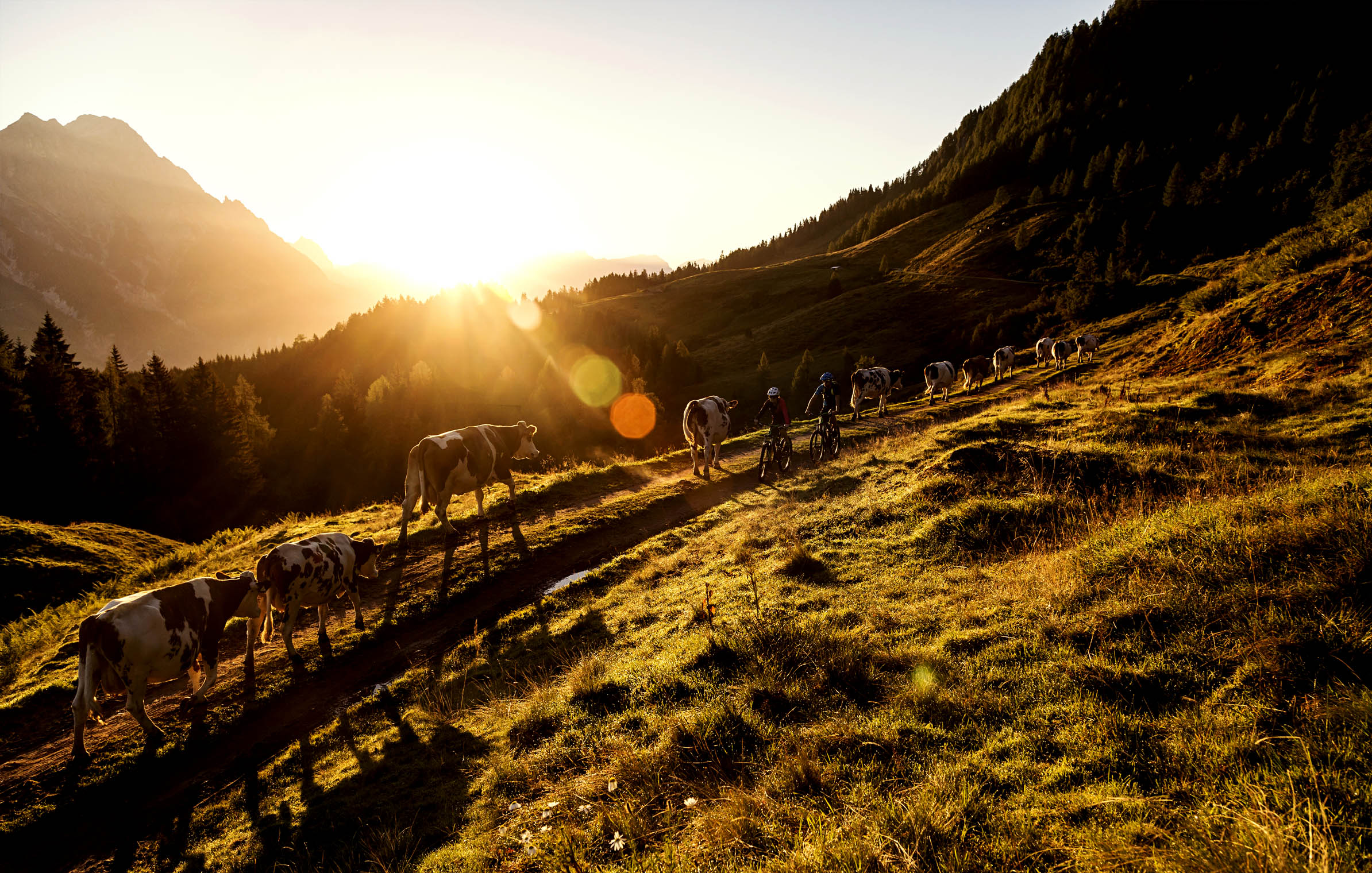 saalfelden_leogang_sunrise_cows_epic_bike_adventure_riding_gravelroad Kopie