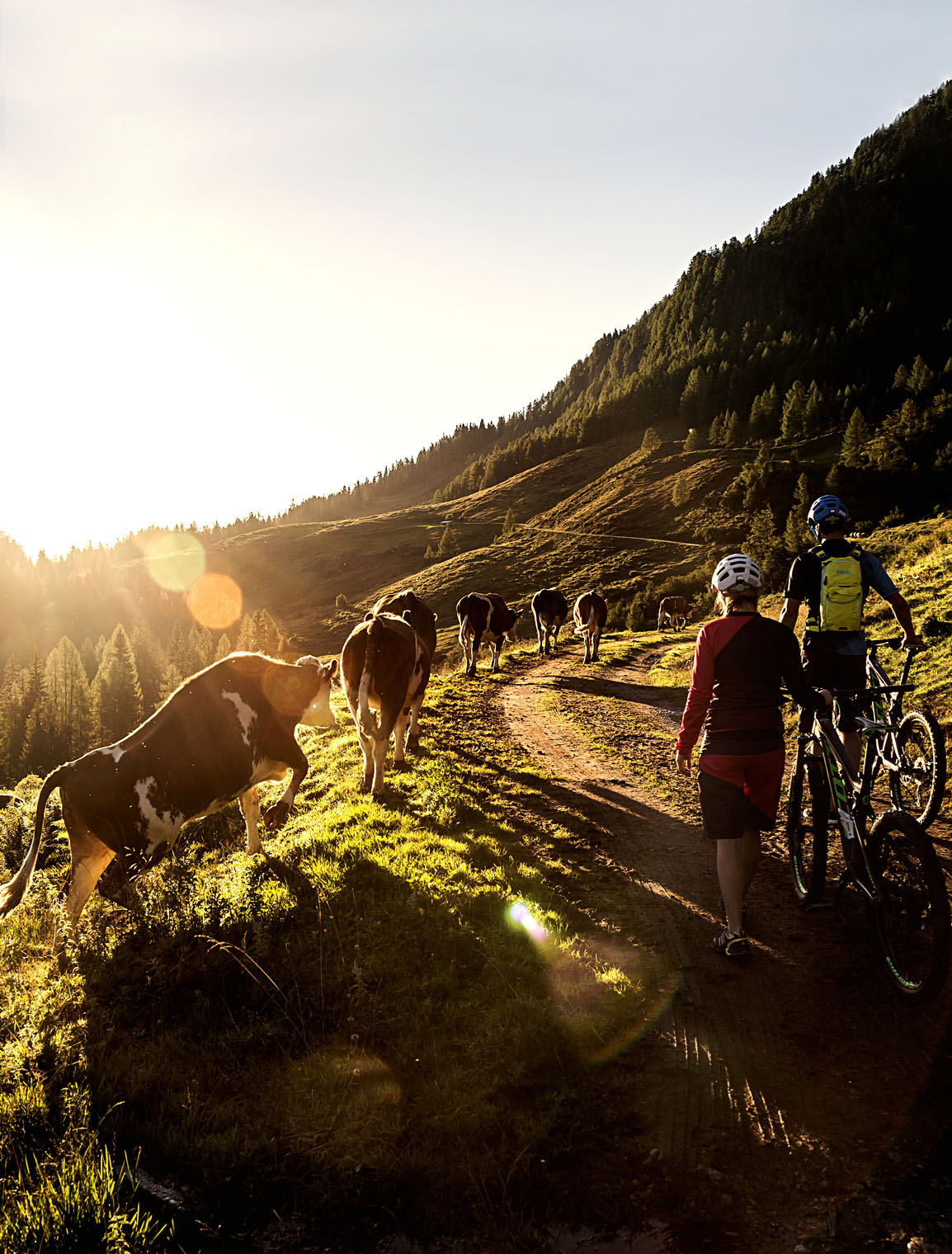 saalfelden_leogang_sunrise_cows_epic_bike_adventure_walking
