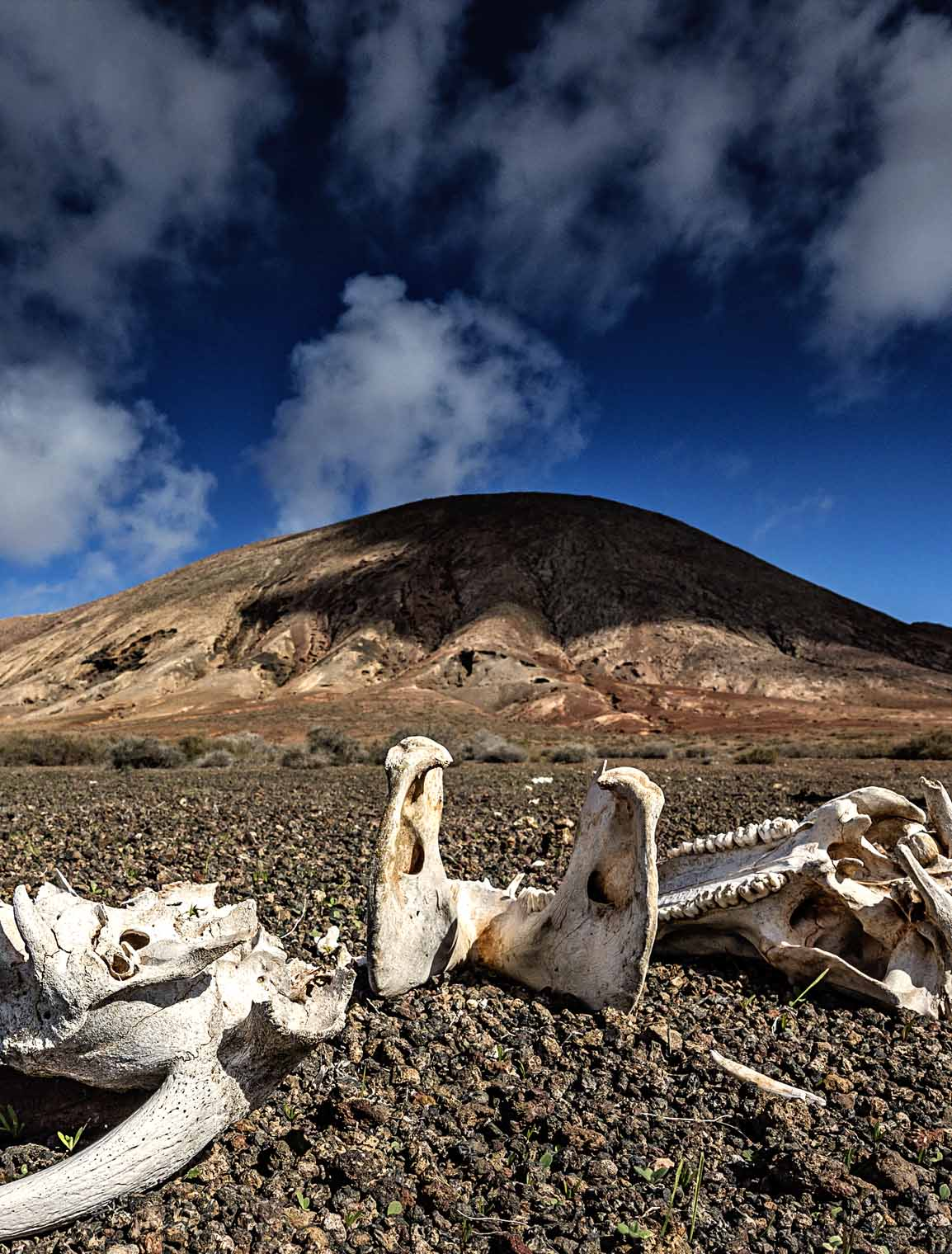 places_fuerteventura_dirt_soil_heat_ground_dead_skulls_bones