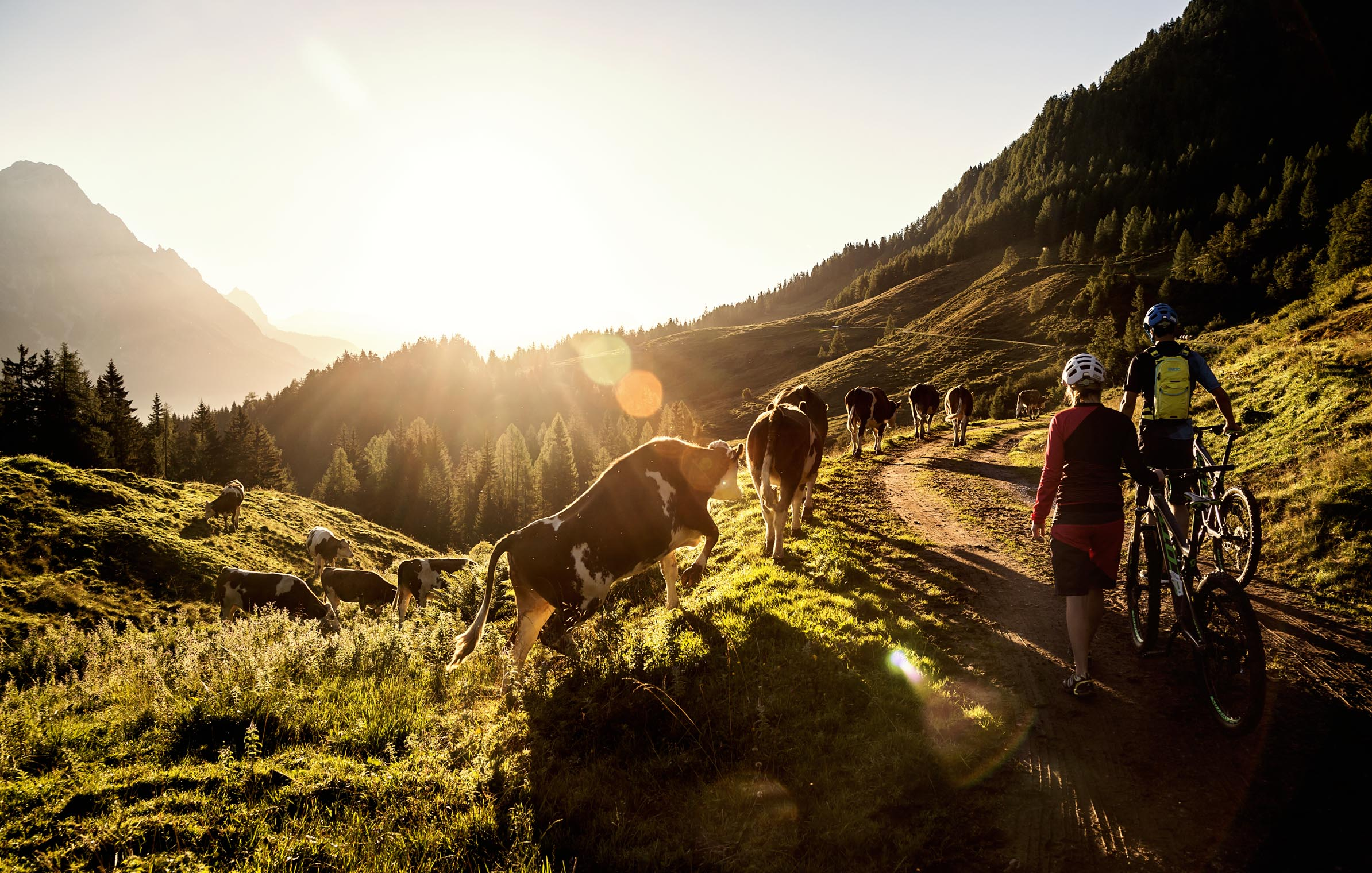 enduro_cows_leogang_Saalfelden_mtb_adventure